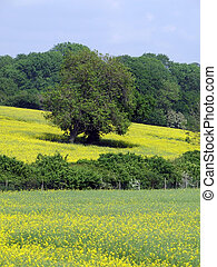 campagne, anglaise