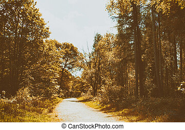 campagne, arbres, promenade, enroulement, par, sentier