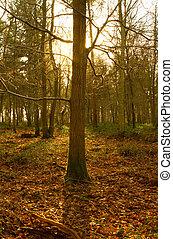 campagne, bois, anglaise