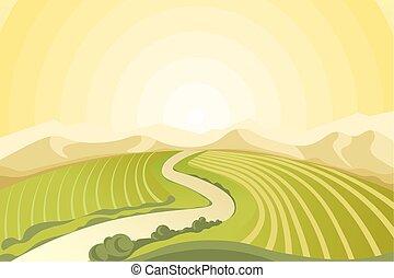 campagne, champs, surprenant, levers de soleil, au-dessus, paysage