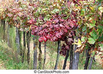 campagne, feuilles automne, détail, vignobles