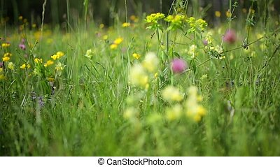 campagne, fleurs