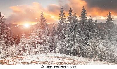 campagne, hiver