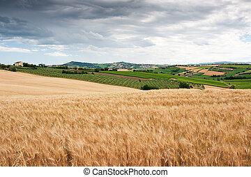 campagne, marche, le, italie, vallonné