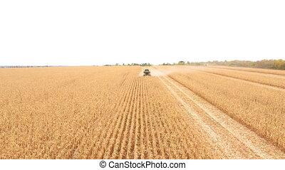 campagne, voler, fonctionnement, sur, beau, harvesting., rassemblement, sommet, farmland., récolte maïs, grand, pendant, paysage, vue, coup, champ, aérien, ferme, arrière-plan., moissonneuse, combiner