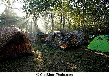campamento, tiendas, en, un, camping