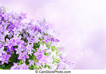 Campanula background - Beautiful spring background with...