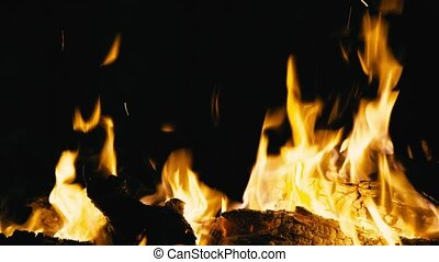 Campfire burning at night, close up