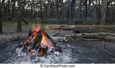 Campfire burning wood outdoors in nature with flames and...