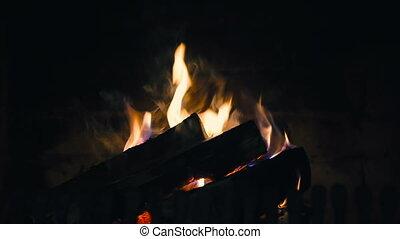campfire camp fire summer burning fire campfire in HD