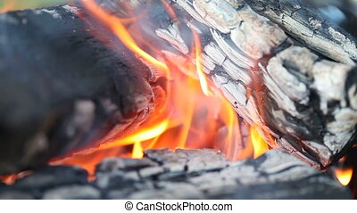 campfire   - Close-up video of camp fire burning