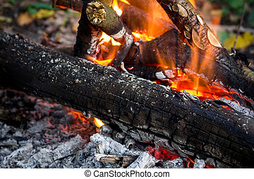 Campfire in the wild forest close up