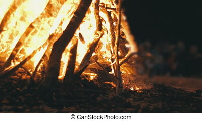 Campfire of the Branches Burn at Night in the Forest
