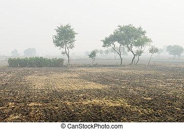 campi arati, nebbioso, coltivato