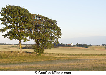 campi, granaglie, tramonto