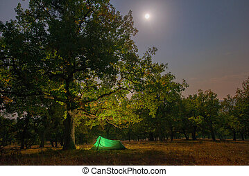 Camping at night in the forest.