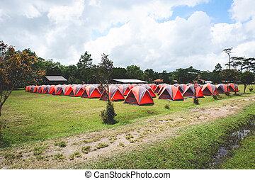 camping, bunte, bereich, baum, kiefer, stehen, hintergrund, linie, zelt