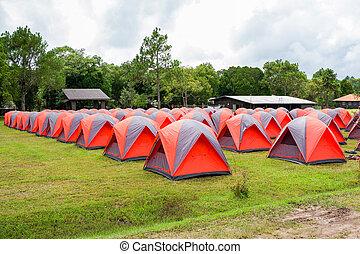 camping, bunte, bereich, park, baum, kiefer, stehen, hintergrund, linie, zelt