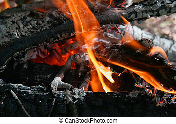 Camping fire in the forest