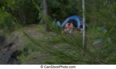 Camping In Natives Forest, Qld Island, Australia