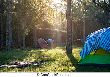 Camping in the forest of Phu Kradueng. Thailand.