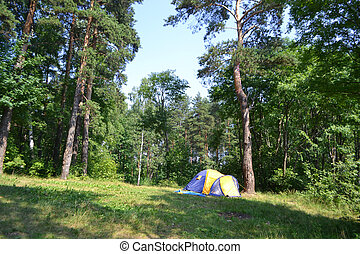 Camping tent and forest - View of camping tent in the summer...