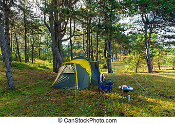 camping tent in a pine forest by the sea