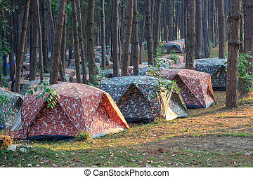 Camping tent in forest.