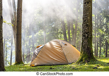 Camping tent in green forest