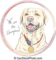 campione, razza, cane, vettore, cane riporto labrador