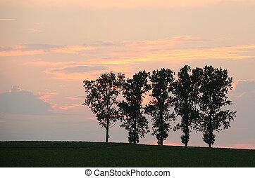 campo, árvores