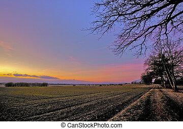 campo, abertos, amanhecer