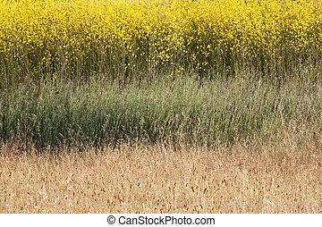 campo, abstratos, mostarda