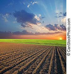 campo agrícola, e, pôr do sol
