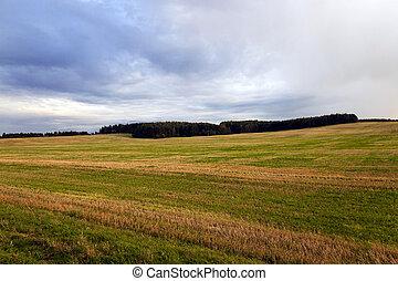 campo, agrícola, pôr do sol