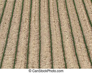 campo agricultura, fundo