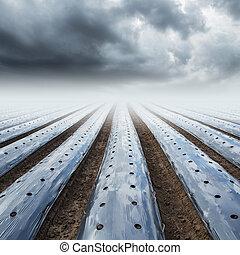 campo, agricultura, mulching, película, proteja, e, rainclouds