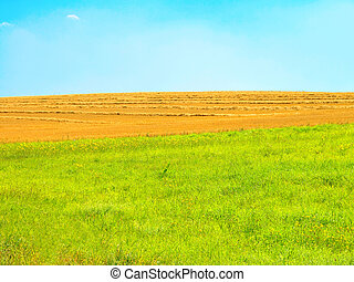 campo, agricultura