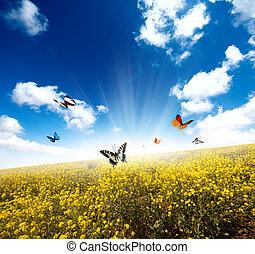 campo amarillo, con, mariposa