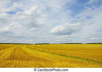 campo, amarillo