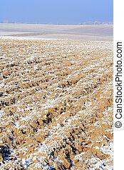 campo arado, em, inverno