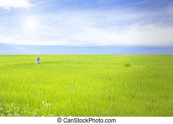 campo arroz, ligado, céu