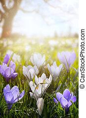 campo, arte, primavera, páscoa, flores, ensolarado, feliz, day;