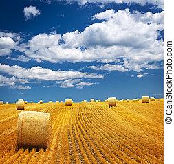 campo azienda agricola, con, balle fieno