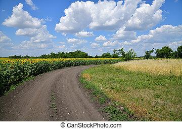 campo, borda, estrada, girassol, florescer