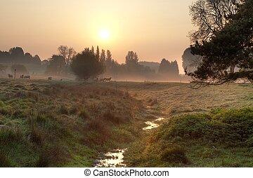 campo, brumoso, inglés, mañana