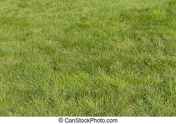 campo, calcio, lussureggiante, erba verde