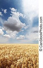 campo, campo, trigo