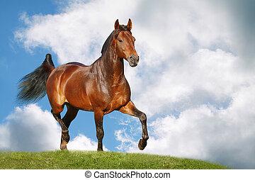 campo, cavallo
