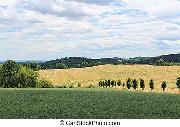 campo cereale, con, alberi verdi, e, sky., ceco, paesaggio